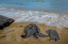 Sri Lanka xét xử vụ đắm tàu làm hàng trăm rùa biển chết