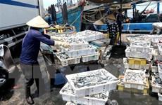 Bình Thuận: Hỗ trợ bốc dỡ hơn 300 tấn hải sản tồn đọng trên tàu cá