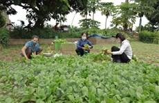 """Hà Nội xây dựng """"vùng xanh"""" đảm bảo sản xuất cung ứng nông sản"""