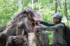 Quảng Ngãi chỉ đạo kiểm tra, xử lý vụ phá rừng phòng hộ Phổ Phong