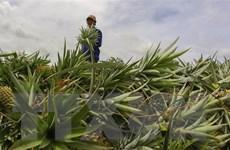 Thúc đẩy sản xuất, lưu thông, tiêu thụ và xuất khẩu nông sản