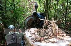 Kiểm điểm trách nhiệm lãnh đạo trong vụ phá rừng phòng hộ Đức Phổ