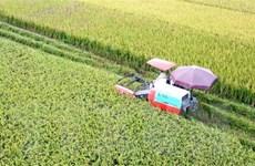 Giá gạo Việt Nam gần như không tăng so với tuần trước