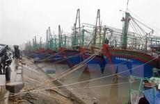 Nghệ An, Hải Phòng sẵn sàng ứng phó với bão số 8 sẽ gây mưa lớn
