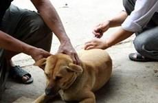 Phú Thọ: Bệnh dại trên đàn vật nuôi vẫn diễn biến phức tạp