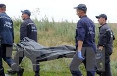 Bắt đầu công tác nhận dạng nạn nhân vụ rơi máy bay MH17