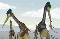 Những con thằn lăn bay không răng từng thống trị bầu trời