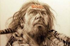 Người Neanderthal có thể đã giao phối với tổ tiên của loài người