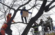 Trung Quốc: Người đàn ông trèo cây rao bán thận giữa Bắc Kinh