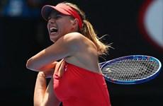 """Australian Open: Sharapova """"hú hồn"""", Murray thắng nhàn nhã"""
