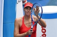 """Hạ gục nhanh Bouchard, Sharapova """"nội chiến Nga"""" ở bán kết"""