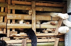Hãng AFP viết về tệ nạn buôn lậu và ăn thịt mèo tại Việt Nam