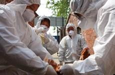 Virus H7N9 biến đổi gen có thể phát triển thành đại dịch ở người