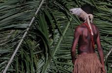 Bộ lạc biệt lập ở Peru đối mặt nguy hiểm khi buộc phải rời làng