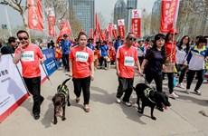 Chó dẫn đường cho người khiếm thị tham gia chạy marathon 5km