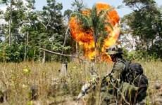 Quân đội Colombia đã ném bom tiêu diệt 18 phần tử FARC