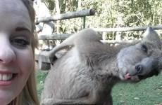 """Những bức ảnh """"photobomb"""" thú vị nhất của các loài động vật"""