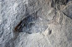 Phát hiện hóa thạch quan trọng nhất nền cổ sinh vật học Canada