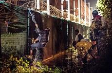 Anh đưa thêm chó nghiệp vụ, rào chắn tới Calais chặn người di cư