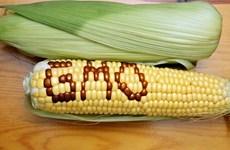 Chính phủ Nga ngừng sản xuất các loại thực phẩm biến đổi gen