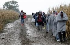 Thủ tướng Szydlo: Ba Lan tiếp nhận 1 triệu người di cư Ukraine