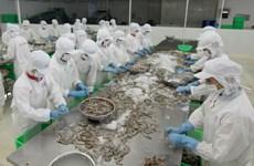 Xuất khẩu tôm của Việt Nam sang Mỹ sẽ có nhiều khởi sắc