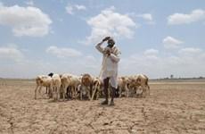 Hạn nặng ảnh hưởng nghiêm trọng tới 330 triệu người dân Ấn Độ