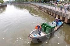 [Video] Cận cảnh cá chết trắng trên kênh Nhiêu Lộc-Thị Nghè