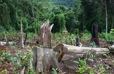 Khởi tố đối tượng cầm đầu băng nhóm phá rừng tại Đắk Nông