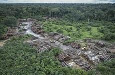 [Video] Mất hơn 900.000 ha rừng Amazon trong vòng 30 năm