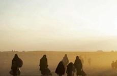 Iraq đã trao trả cho Thổ Nhĩ Kỳ 188 trẻ em dính líu tới IS