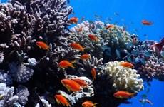 Israel và một số nước Arab tham gia dự án bảo vệ san hô tại Biển Đỏ