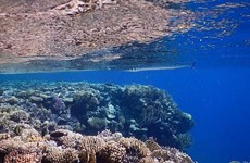 Đại dương sẽ mất đi gần 20% số sinh vật biển do biến đổi khí hậu