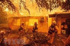 Tập đoàn PG&E của Mỹ đồng ý bồi thường lớn do gây cháy rừng