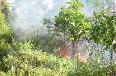 [Photo] Khẩn trương dập tắt đám cháy rừng tại huyện Hòa Vang