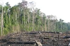 Brazil: 'Lá phổi xanh' Amazon đang bị tàn phá ở mức báo động