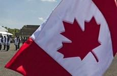 Chuyên gia Scotiabank: Kinh tế Canada đang trên đà khởi sắc