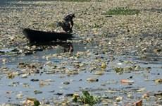 WB: Ô nhiễm nước đang làm giảm tốc độ tăng trưởng kinh tế