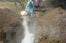 Ninh Thuận: Xuất hiện dịch bệnh tả lợn châu Phi ở huyện Ninh Sơn