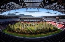 Áo: Ý tưởng độc đáo biến một sân bóng đá thành rừng cây