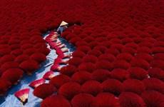 Việt Nam lọt vào những khoảnh khắc đẹp nhất thế giới
