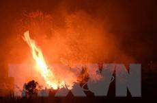Indonesia: Hơn 900.000 người bị bệnh về đường hô hấp do cháy rừng