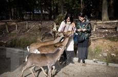Nhật Bản: Số lượng khách nước ngoài giảm mạnh nhất trong 7 năm