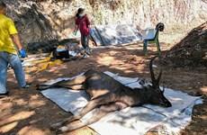 Hươu rừng ở Thái Lan chết sau khi nuốt phải 7kg túi nhựa