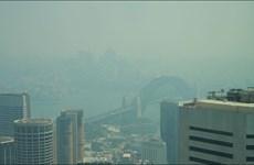 Australia: Thành phố Sydney lại chìm trong khói mù ô nhiễm