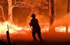 Cháy rừng tại Australia: Cộng đồng quốc tế chung tay hỗ trợ ứng phó
