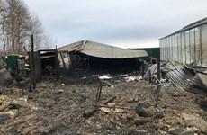 Nga: Xác minh thông tin người Việt gặp nạn trong vụ cháy nhà kính