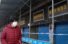 'Khoảng 1.723 trường hợp nhiễm virus viêm phổi lạ tại Vũ Hán'