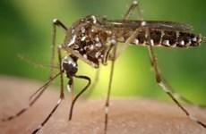 PAHO cảnh báo dịch sốt xuất huyết tăng mạnh tại châu Mỹ
