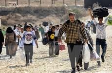 Liên minh châu Âu cân nhắc tiếp nhận 1.500 trẻ em di cư ở Hy Lạp